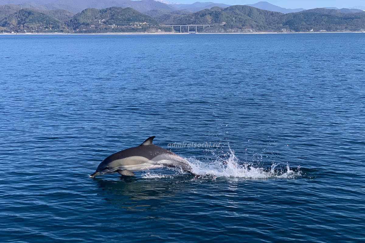 Дельфины в Сочи в море на яхте