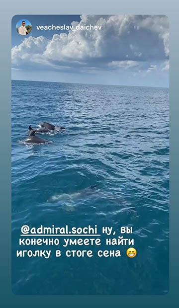 Афалины в открытом море в Сочи
