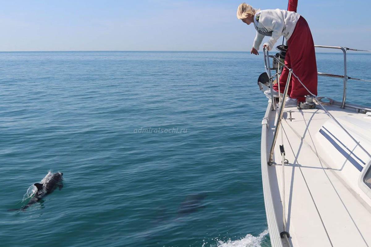 Дельфинарий в море