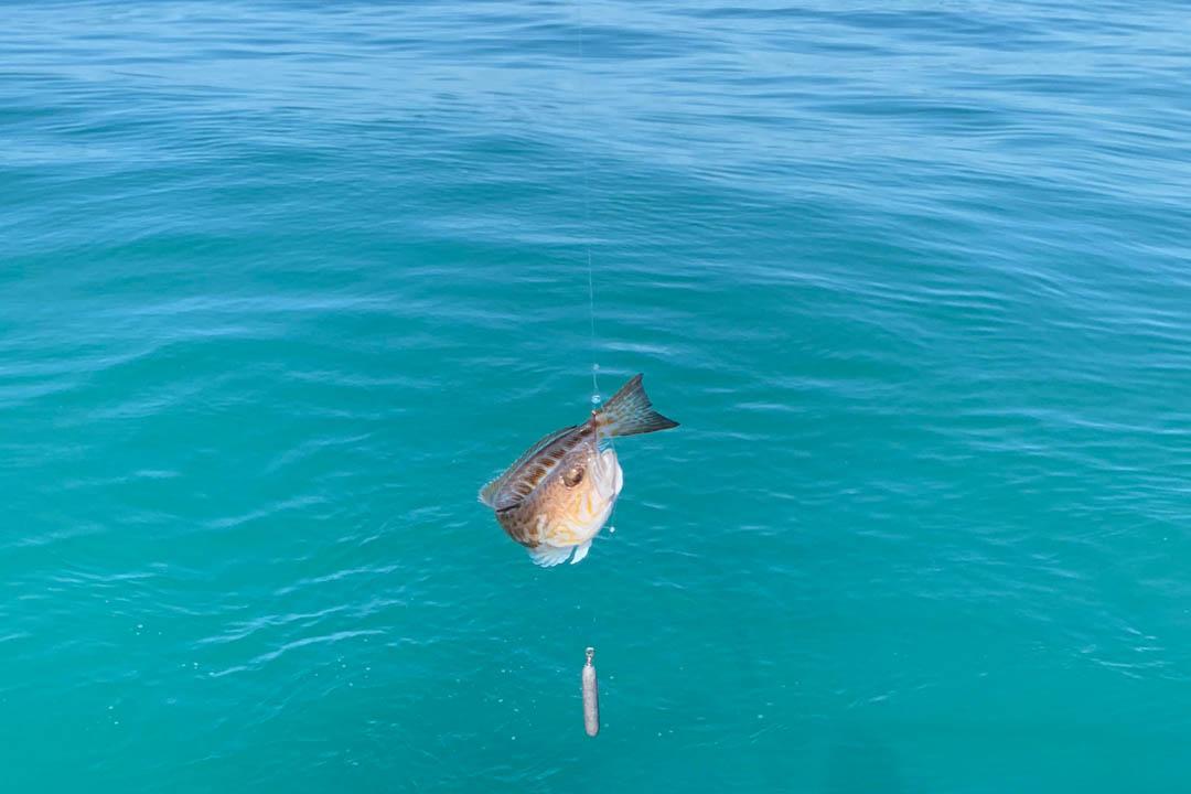 Рыбалка в открытом море в Сочи