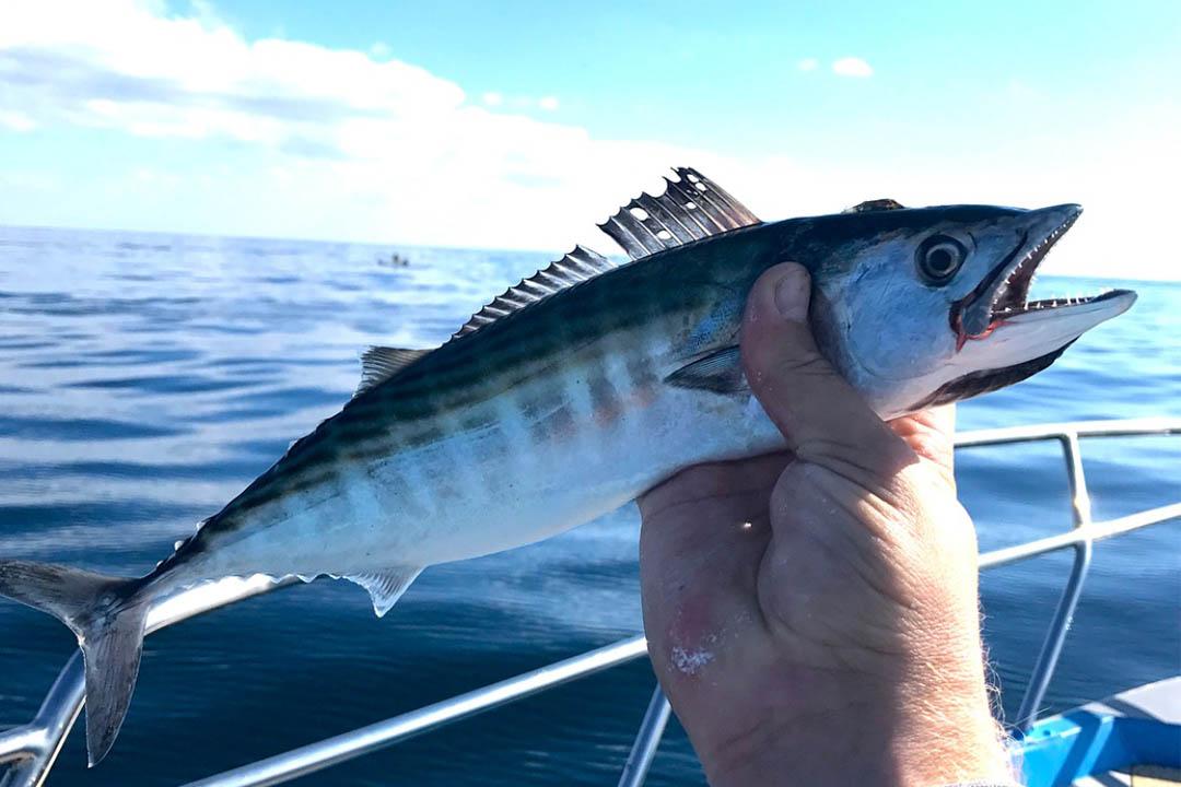 Рыбалка пеламиды в Сочи